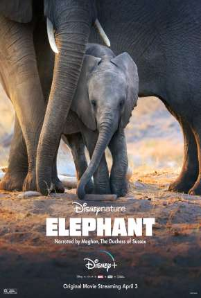 Elefante - Legendado Filmes Torrent Download completo